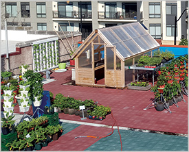 H Street Farms' rooftop garden (Niraj Ray)