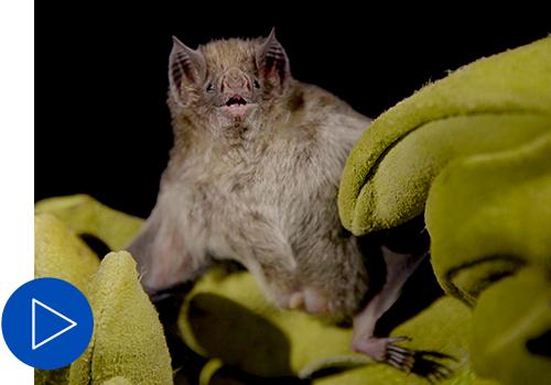 Bat being held in gloves