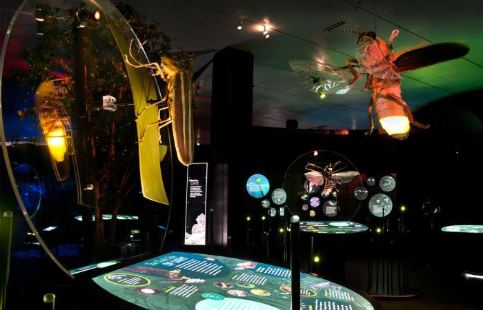 A larger-than-life model of a dragonfly is suspended from the ceiling near a digital display screen that contains content about fireflies.