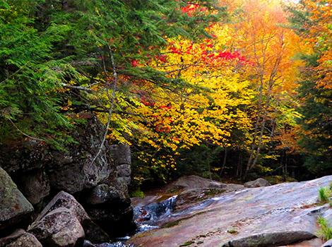 Evergreen tree and deciduous trees with leaves that are changing colors surround a rocky stream.