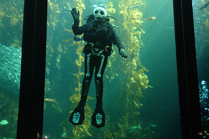 A diver dressed as a Halloween skeleton in our kelp forest exhibit.