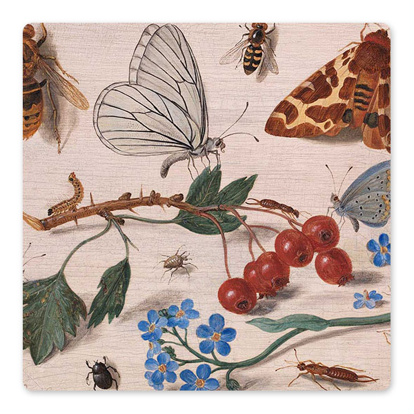 Jan van Kessel the Elder, 'Insects with Common Hawthorn and Forget-Me-Not', 1654 ©️ The National Gallery, London